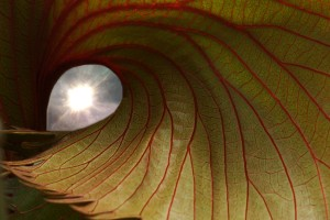 circle leaf with inner light I