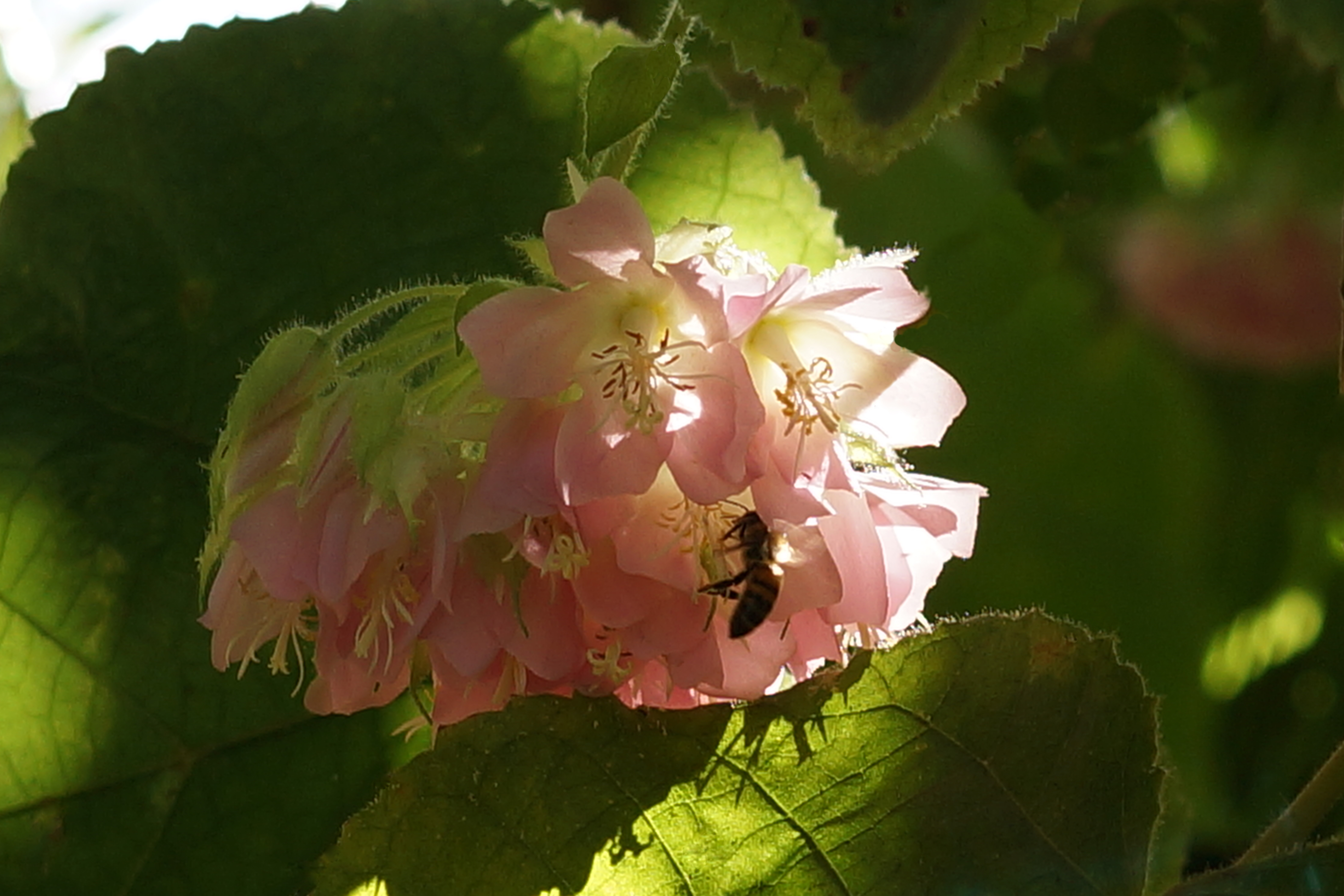 pink-with-bee